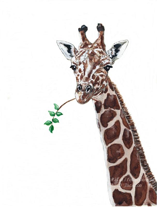 Giraffe Watercolor Art Print Safari Animal Art Wildlife
