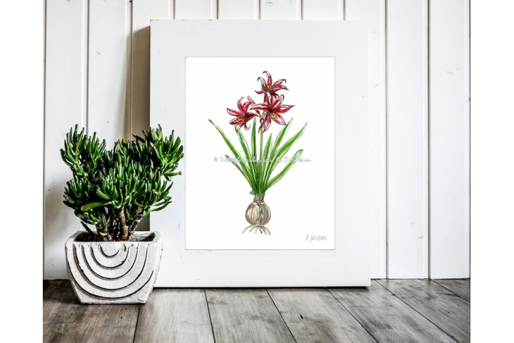 Contemporary Amaryllis Christmas Decor, Watercolor Art Print 11 x 14 Unframed