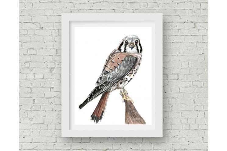 American Kestrel, Sparrow Hawk Watercolor Art Print, 11 x 14