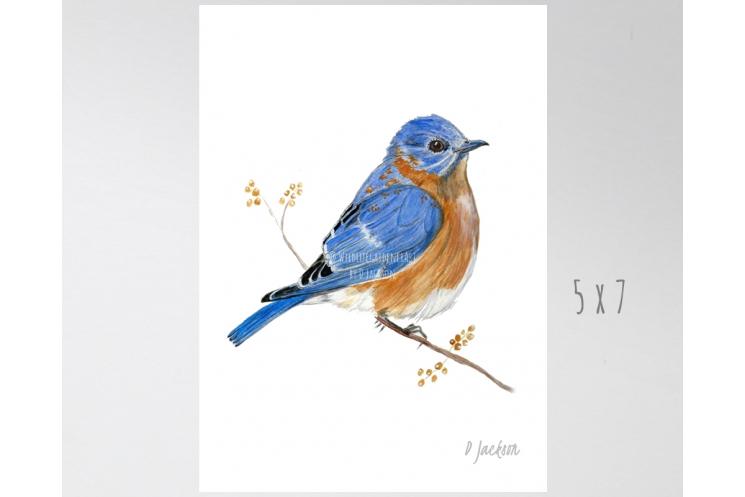 Bluebird Watercolor Art Print