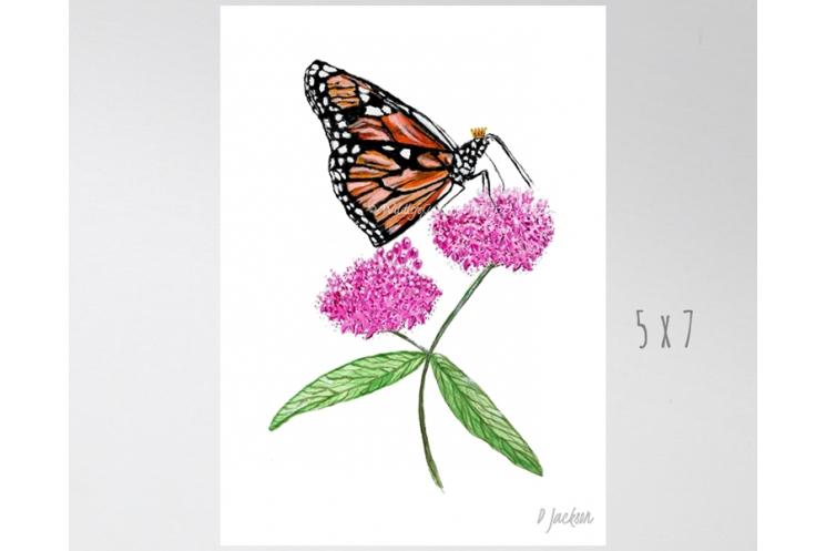 Monarch Butterfly on Milkweed Watercolor Art Print