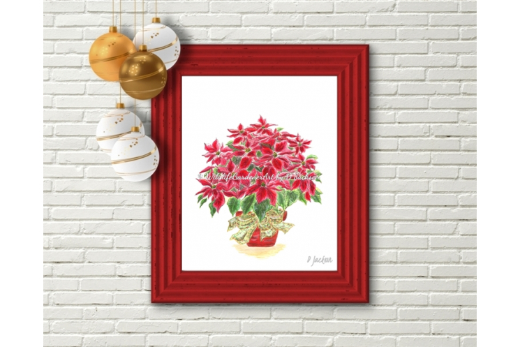 Red Christmas Poinsettia Plant Watercolor Art Print
