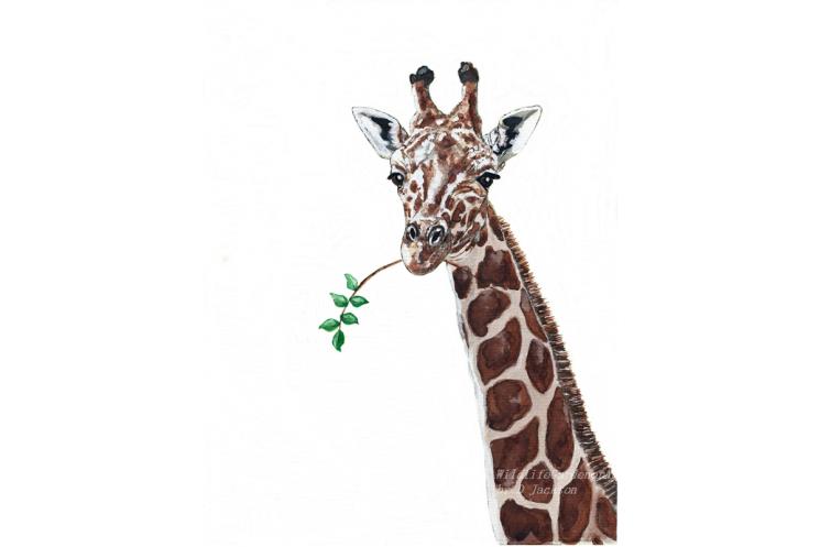 Giraffe Watercolor art print, Safari Animal, African Wildlife Art