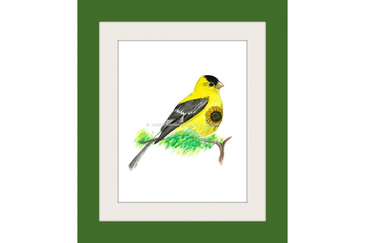 Yellow Goldfinch with Sunflower Watercolor Art Print