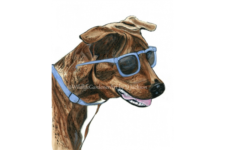 Brindle Dog in Blue Sunglasses Art Print Unframed 8 x 10