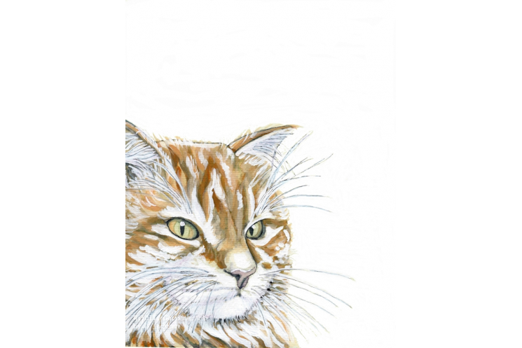Watercolor Orange Cat Art Print, Pet Portrait, Modern rustic, pet lovers gift