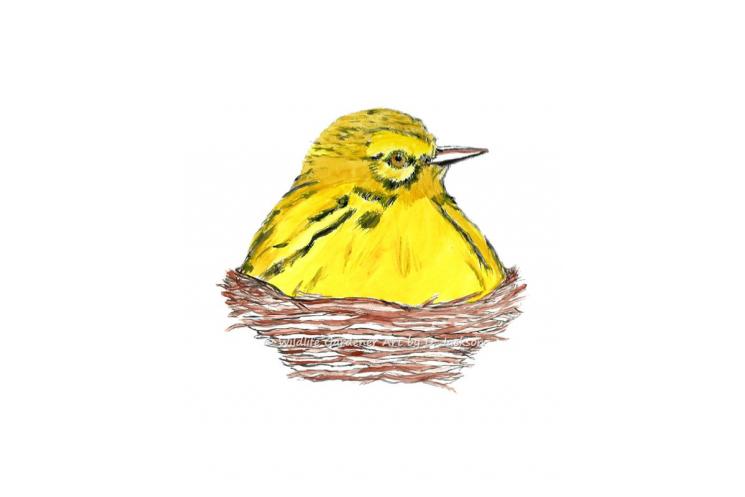 Yellow bird in Nest watercolor art print