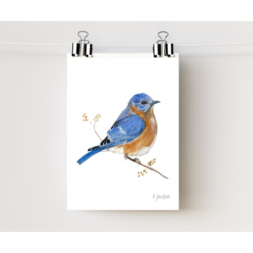 Bluebird Watercolor Art Print