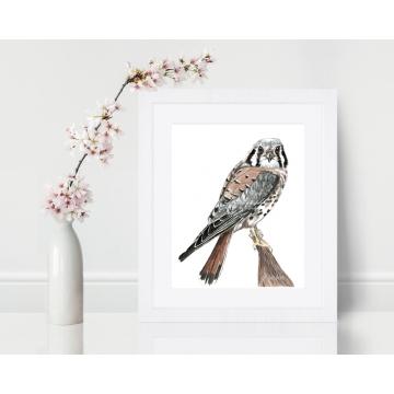 American Kestrel, Sparrow Hawk Watercolor Art Print 8 x 10