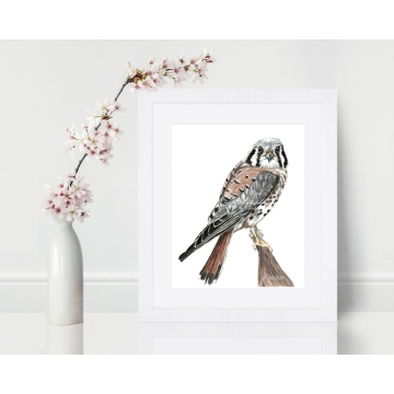 American Kestrel, Sparrow Hawk Watercolor Art Print 8 x 10