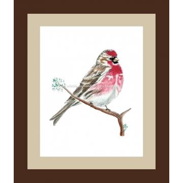 Common Redpoll Watercolor Bird Art Print