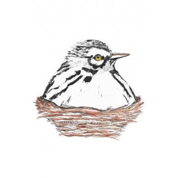 White Warbler Bird in Nest, Watercolor art print, nursery decor