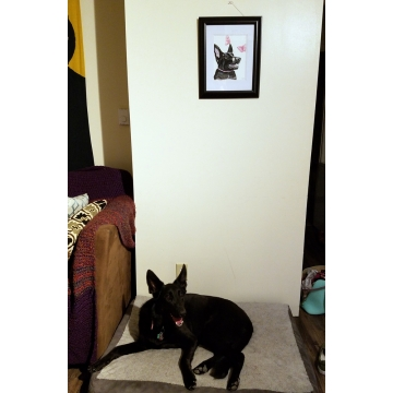 Pets and Their Portraits at Home