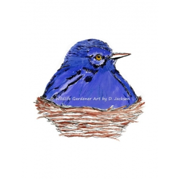 Blue Bird in Nest Watercolor Art Print