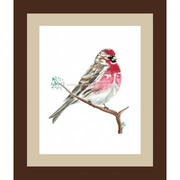 Common Redpoll Watercolor Bird Art Print
