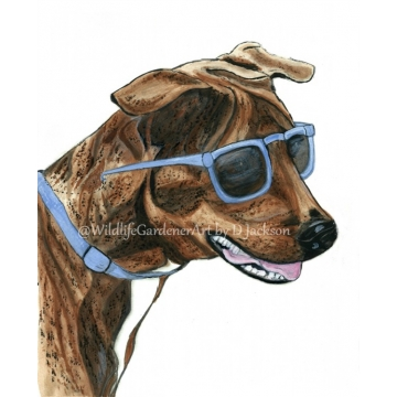 Brindle Dog in Blue Sunglasses Watercolor Art Print