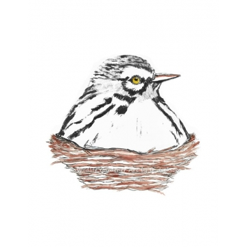 White Warbler Bird in Nest Watercolor Art Print